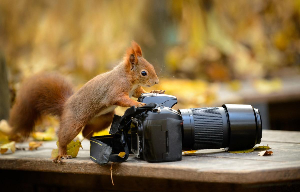 eichh_kamera